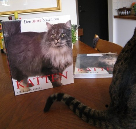 Den store boken om katten